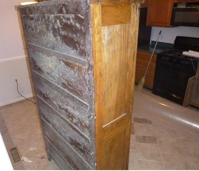 Photo shows mold covering the back of a wooden bookcase
